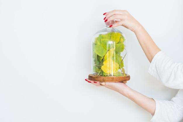 創造的なインテリア。白い壁の上のガラスのディスプレイドームに木の葉を保持している女性