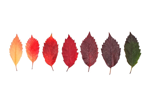 Creative layout of colorful leaves