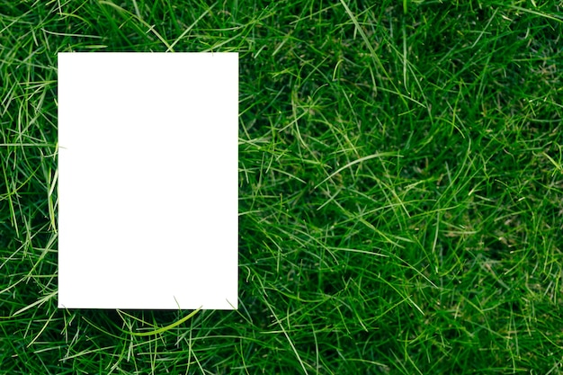 Creative layout composition frame made of green fresh grass with a beautiful texture with a white pa...