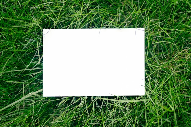 Creative layout composition frame made of green fresh grass with a beautiful texture with a white paper card note and shadows from sunlight, flat lay and copy space.