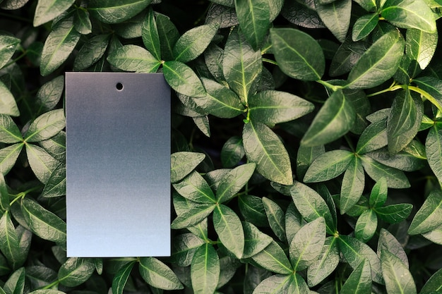 Creative layout composition frame made of green periwinkle leaves with a beautiful texture with gree...