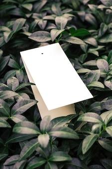 Креативная макетная композиция из листьев зеленого барвинка с красивой фактурой и белоснежным ...