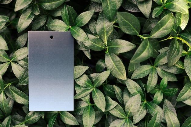 Креативная макетная композиция из листьев зеленого барвинка с красивой фактурой и зелеными ...