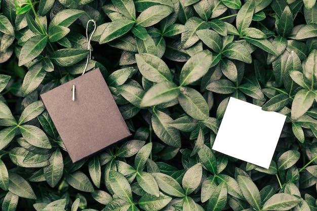 Креативная макетная композиция из листьев зеленого барвинка с красивой фактурой с двумя ...