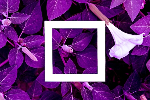Creative layout of exotic tropical neon leaves with white abstract square frame.