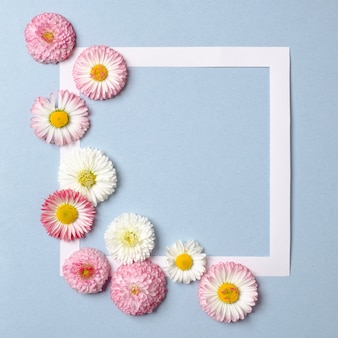 Creative layout made of daisy spring flowers and paper border frame on pastel blue background.