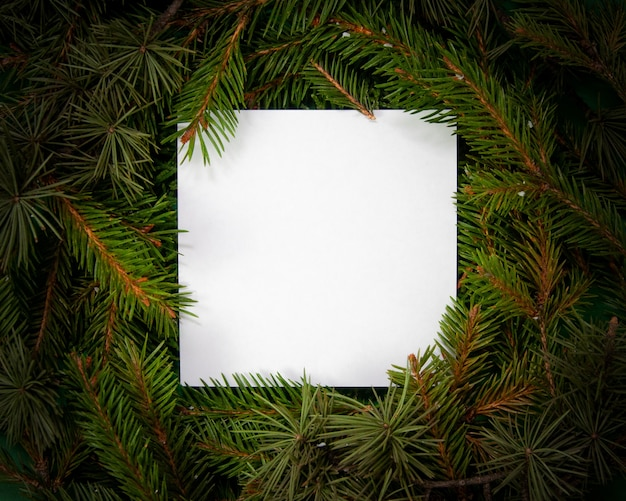 Creative layout  made of fir tree branches with white square shape paper christmas and new years card concept flat lay top view