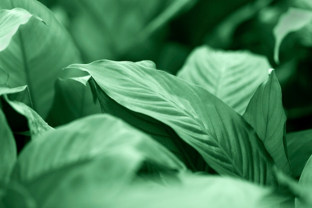 Creative layout made of green leaves background. flat lay. nature concept shallow dof