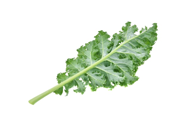 Creative layout made of kale on white background