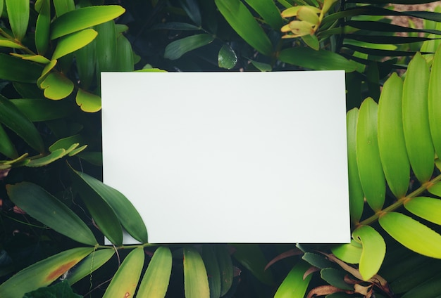 Creative layout made of  leaves with paper card note. flat lay. nature concept