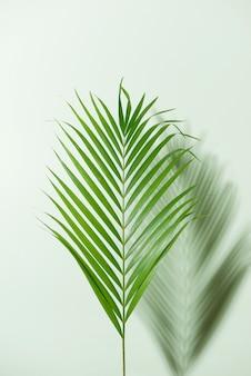 흰색 바탕에 화려한 열 대 잎의 크리 에이 티브 레이아웃입니다. 최소한의 여름