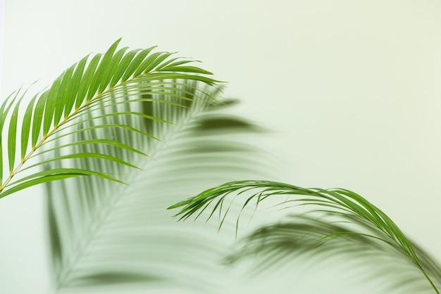 白地にカラフルな熱帯の葉で作ったクリエイティブなレイアウト。最小限の夏