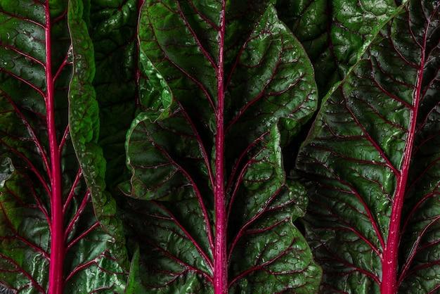 녹색과 빨간색 망골드 샐러드 잎으로 만든 창의적인 레이아웃입니다. 식물 패턴 질감, 자연 개념