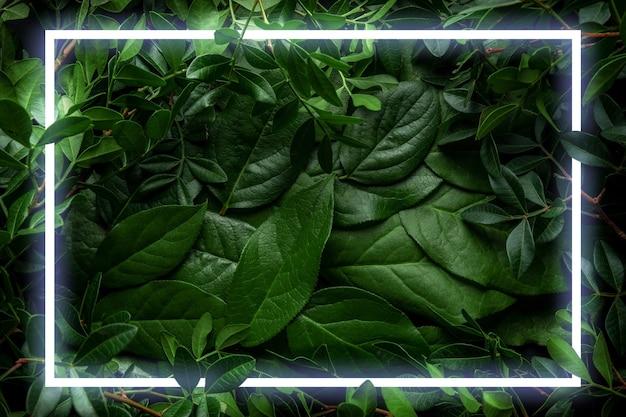 네온 프레임으로 나뭇잎과 가지로 만든 창의적인 레이아웃