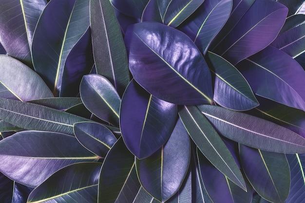 보라색 잎으로 만든 창의적인 레이아웃