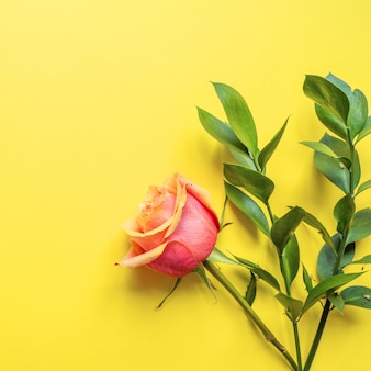 Creative layout made of pink flowers and ruscus twigs on yellow background