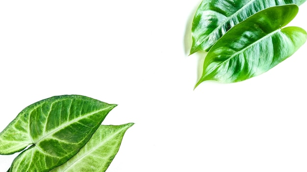 Creative layout made of tropical decorative leaves on white background