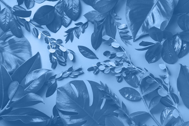 Creative layout made of tropical leaves in monochrome color. trendy blue and calm color. flat lay. top view.