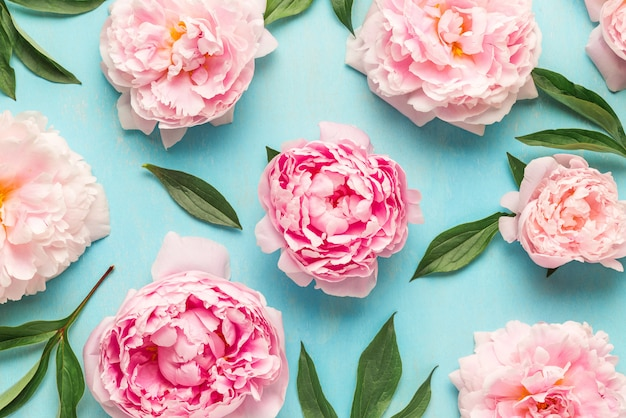 Creative layout made with pink peony flowers . flat lay. flower composition