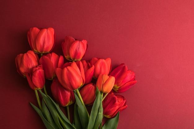 真っ赤な表面にチューリップの花で作られたクリエイティブなレイアウト
