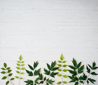 Creative layout of foliage on a white background with space for text