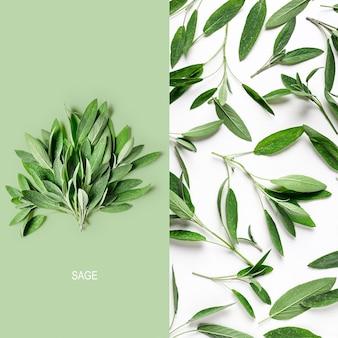 新鮮なセージの葉を使ったクリエイティブなレイアウト。サルビアハーブの束と白い背景の上のパターンの配置。上面図、フラットレイ。花のデザイン要素。健康的な食事とダイエットの概念