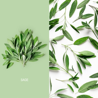 Creative layout with fresh sage leaves. salvia herbs bunch and pattern arrangement on white background. top view, flat lay. floral design element.  healthy eating and dieting concept