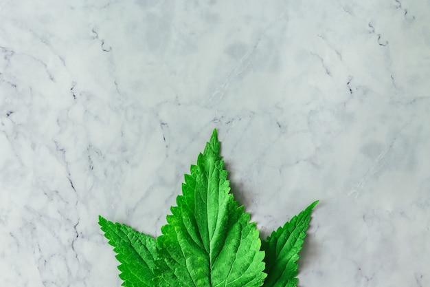 밝은 대리석 테이블 벽에 녹색 잎을 가진 창조적 인 레이아웃. 최소한의 건강한 자연 식품 개념. 평평하다.