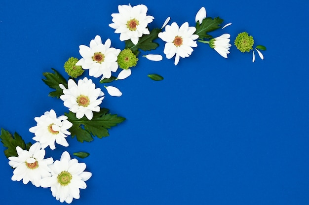 Creative layout with white flowers and green leaves on a blue background. spring concept. flat lay, top view.