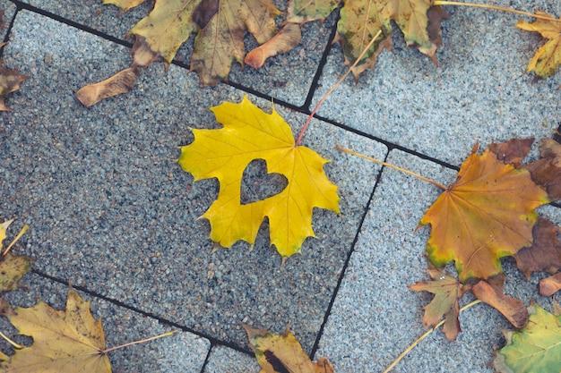 Креативный кленовый лист лежит на дорожке в парке