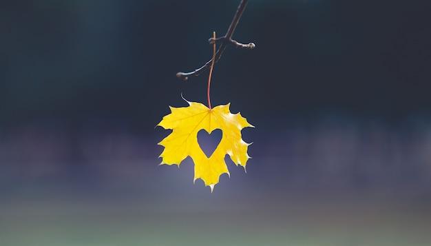 Творческий кленовый лист на ветке в парке. осенняя концепция.