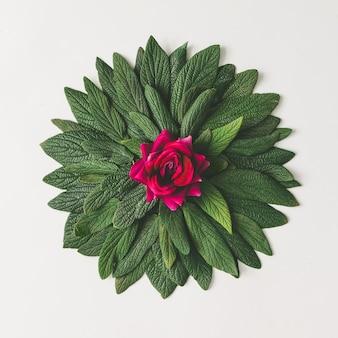 녹색 잎과 분홍색 장미 꽃의 창조적 최소한의 배열
