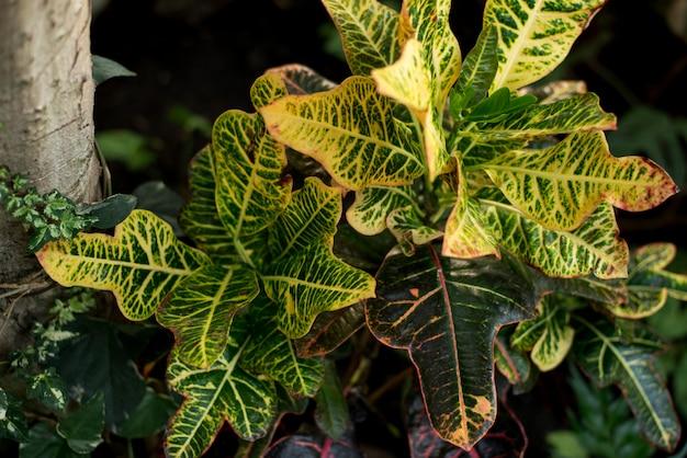 열대 나뭇잎과 꽃으로 만든 창조적 인 자연 레이아웃