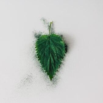 緑の粉で創造的なイラクサの葉のレイアウト。