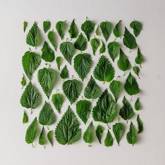 創造的なイラクサの葉のパターン