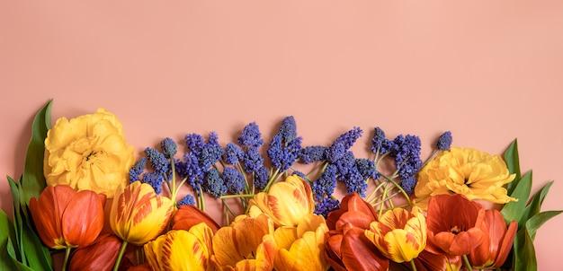 Креативная весенняя композиция с разложенными на поверхности цветами мускари и тюльпанами.
