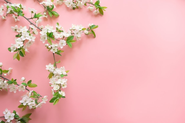 Creative springtime layout, spring white blossom branches on pastel pink. floral. view from above, flat lay. copyspace background