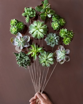 Creative succulent plants from above like a balloon