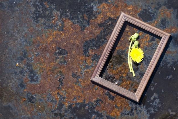 素朴な鉄の背景に創造的なトップビュータンポポの花