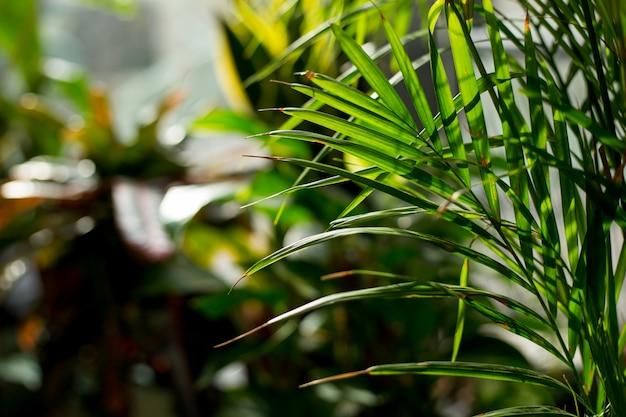 Креативные тропические зеленые листья макет. природа летняя концепция.