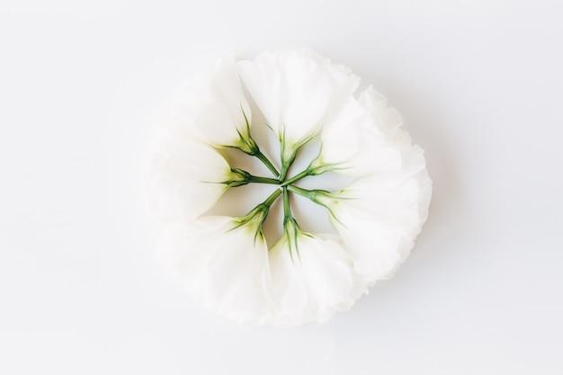 創造的な白い花composition.flatlay、white.floral背景に分離。