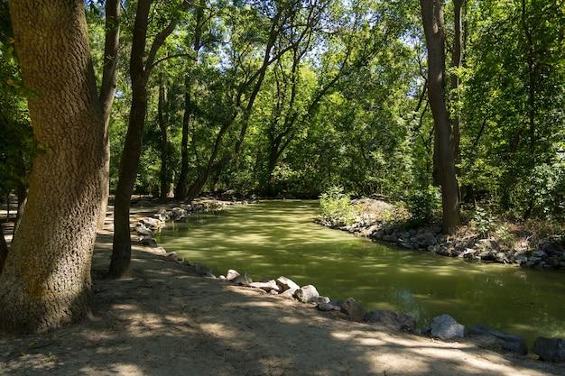 화창한 여름 날에 우크라이나의 자연 보호구 askania 노바에서 정체 된 녹색 물이있는 크릭.