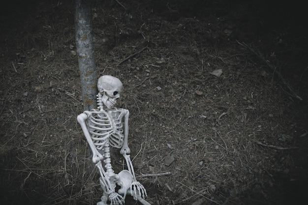 Creepy skeleton lean on tree in woods