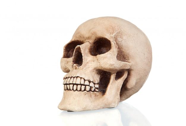 Creepy skull with reflection