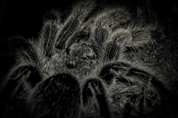 不気味なクモのクローズアップ