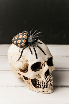 Жуткий игрушечный паук на человеческом черепе