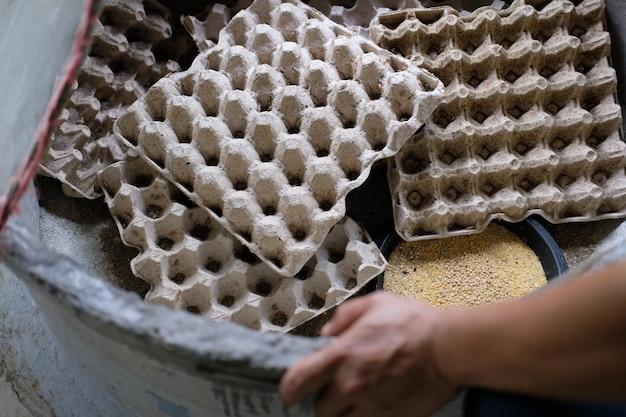 農場の卵トレイにコオロギの虫虫