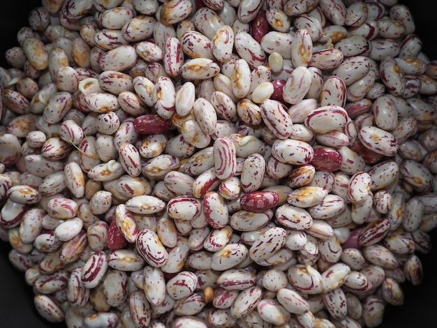 크림슨 콩 콩과 식물 음식 배경