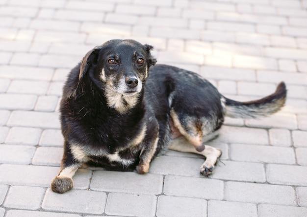 Искалеченная собака без трех ног, лежащая на дороге,
