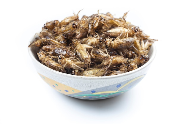 Crispy fried insects on bowl